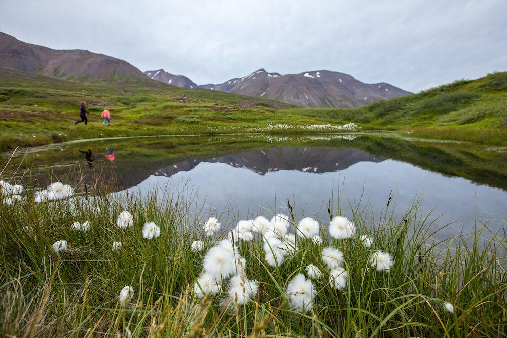ulkosuomalaisen raha-asiat riemuitsemassa islantilaisella niityllä