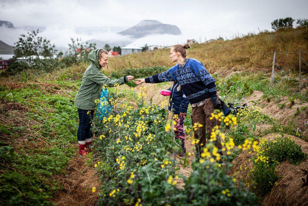 hildur yhteispalsta sosiaalinen viljely